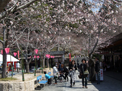 法多山桜まつり